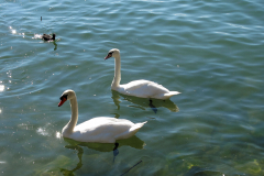 Tiere in Rapperswil